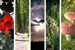 scenes from nature bookmarks