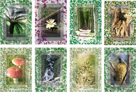 scenes from nature notelets with patterned border